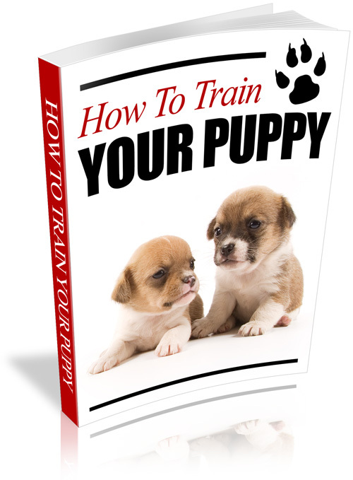 Product picture HOW TO TRAIN YOUR PUPPY